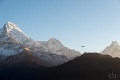 South Annapurna (cbouchon) Tags: annapurnai machhapuchhre paysage népal montagne temps poonhill sommet avion hiunchuli annapurnasud transport neige massifdelannapurna nã©pal ghodepani westernregion np