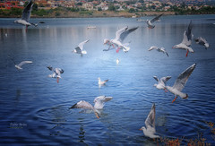 (355/16) La danza de las gaviotas (Pablo Arias) Tags: pabloarias photoshop nxd texturas gaviotas aveacuática pájaro agua salinas calpe alicante comunidadvelenciana