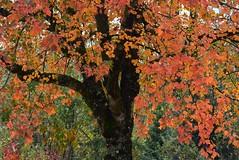 (careth@2012) Tags: fall autumn nature scenery scene scenic view leaves