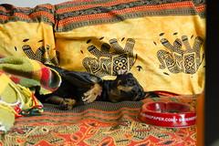 Cigarettes (Raissa Fitzgerald Photographer) Tags: luppola animals dog doglove pinscher love cute sweet winter home dolce cane amore coccole hugs