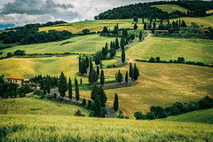 Zig-Zag (Edoardo Angelucci) Tags: tuscany toscana val dorcia landscape street san quirico edoardo angelucci photography tree ilce7m2 geo:lon=43078412 geo:lat=11754377 monticchiello fe70200f4