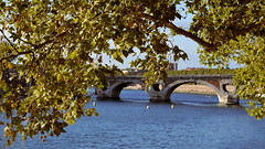 Pont Neuf (frogizlou) Tags: automne toulouse pont neuf feuillesmortes fallenleaves fall leaves feuilles garonne sun city life