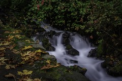 Fall Photoshoot-13 (Jorge97301@gmail.com) Tags: autumn fall waterfalls oregon pnw beautiful stunning farm silver falls state parks forest creek stream water pool lake rocks dog portland silverton salem