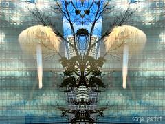 window reflection (Sonja Parfitt) Tags: mirror tree buildings clouds sky display
