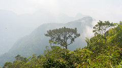 DSC_6006 (sergeysemendyaev) Tags: 2016 rio riodejaneiro brazil pedradagavea    hiking adventure best    travel nature   landscape scenery rock mountain    high  forest jungle trees green