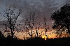a sera quando le stanche nuvole dileguano nel buio incerto (Alberto Cameroni) Tags: tramonto toscana ponsacco ppp pasolini poesia leica leicaxtyp113 valdicava