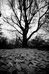 Near of Sight (black) (Sine--Qua--Non) Tags: fall winter landscape nature outdoors park indianapolis indy indiana sonya77 slta77 sigma816 wideangle uwa bw blackwhite monochrome tree trees
