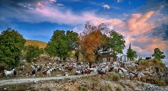 (Dimitil) Tags: dolo epirus epire hellas greece pogoni animals chapel religion rural ruralscene nature naturallife