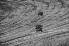 DSC_0322 (Kaigara Online) Tags: enisala cetate capul dolosman bw clouds water reflections trees fields romania tulcea jurilovca birds cows sheep cross cinema gods ruins arganum citadel medieval