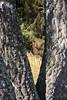 ckuchem-9763 (christine_kuchem) Tags: baum birken borke bã¤ume drilling laubbaum nadelbã¤ume natur rinde sommer tannenwald wald zwilling drei sonnig zwei