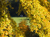 Autumn_4 (plastalg) Tags: autumngold