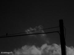 The Bird and Pole (daleteague17) Tags: black white collection blackandwhitecollection blackandwhitepicture blackandwhitephotograph bird telephonepole telephonewires