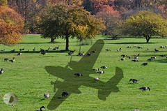 Ignorance is bliss (firstlookimages) Tags: outdoors animals birds geese canadagoose warplanes lancasterbomber shadows fallcolors digitalmanipulation digitalphotography detail