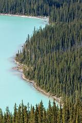 Peyto Lake (Jade Prints) Tags: icefieldsparkway banff banffnationalpark peytolake