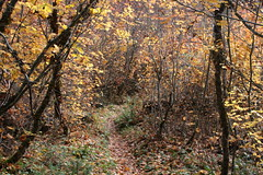 The camera really slowed me down on this hike (rozoneill) Tags: rogue river siskiyou national forest upper trail takelma gorge natural bridge oregon hiking union creek autumn colors
