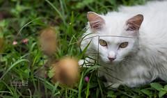 Carlos Tadeu (katadeu) Tags: imagemeluz aniversarios book carlos carlostadeu casamento ensaios festa fotografia tadeu gatos felinos