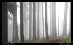 11-16 6555_Nebelmorgen (werner_austria) Tags: elitegalleryaoi bestcapturesaoi autofocus ruby10 ruby15
