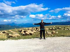 As a sheep among wolves (myabbolo) Tags: animali pecora sheep