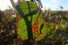 Autumn at Devils Dyke (Jon & Katia) Tags: rx100 sony nature landscape autumn closeup devilsdyke leaves sonyrx100m4