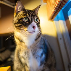 Oscar - early AM (grahamrobb888) Tags: nikond800 sigma20mmf18 birnamwood birnam oscar pet cat eyes indoors