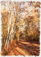 Painterly Path (lclower19) Tags: artistaimpresso birch trees path hornpond woburn massachusetts nature frame