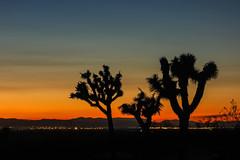 guardians (Karol Franks) Tags: antelopevalley desert lancaster palmdale joshuatrees sunset color california socal autumn night waiting supermoon iscoming sky evening