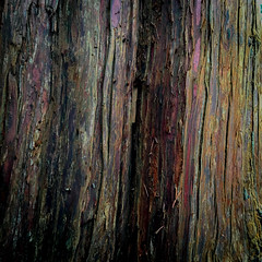 Woodland Colour (melcolliephoto) Tags: texture oak stripes tehidywoods tree trunks wooden yellow cornwall tehidy park woodland