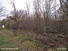 After Mear's ride coppice 27/11/2016 (the_greenman) Tags: waresleywood gransdenwood wildlifetrust ancientwoodland hazel bluebells oxlips coppicemanagement thegreenman wwwwaresleywoodcouk conservation