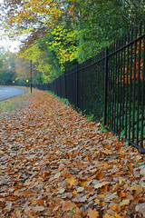 Leafy Path (Adam Swaine) Tags: paths footpath leaves dulwich london uk canon swaine england english britain trees leaf ciy rails walks