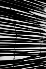 The End of Privacy (belleshaw) Tags: blackandwhite ranchosantaanabotanicgarden privacy bamboo wires sticks wood detail abstract metal fence bokeh