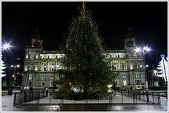 George Square Christmas Tree (Ben.Allison36) Tags: george square tree glasgow night shot scotland christmas lights city chambers hand held