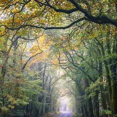 Le passage (philippe MANGUIN photographies) Tags: broceliande foretdebroceliande forest fort foretdepaimpont paimpont bretagne hautebretagne nature automne