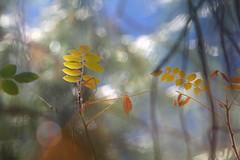 Troodos Geopark (11) (Polis Poliviou) Tags: polispoliviou polis poliviou   cyprus cyprustheallyearroundisland cyprusinyourheart yearroundisland zypern republicofcyprus  cipro  chypre   chipir chipre  kipras ciprus cypr  cypern kypr  sayprus kypros polispoliviou2016 troodosgeopark troodos mediterranean nicosia valley life nature forest historical park trekking hiking winter walking pine pines prodromos limassol paphos fall autumn geopark kakopetria