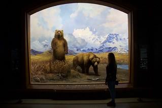 alaska brown bear & teenager