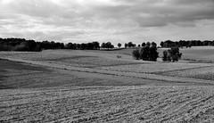 Weite Felder 1 (Lichtabfall) Tags: trees sky blackandwhite bw tree monochrome field clouds landscape blackwhite feld felder himmel wolken fields sw schwarzweiss raven landschaft bäume baum