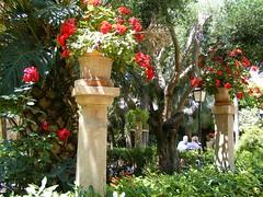 DSCF9374.jpg in Palma (annelies_visser) Tags: flowers spain tuin mallorca bloemen spanje balearen bloempot pilaar