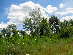 Photo By: Karlona M. (age 6), Boys & Girls Clubs of Battle Creek (Parks in Focus) Tags: battlecreek picturethis 2015 northcountrynationalscenictrail parksinfocus boysgirlsclubsofbattlecreek