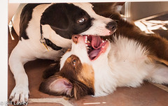 Dogs kiss too. S & T (informalphotography) Tags: dog pet kiss outstandingshots
