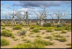Standing in Dry Lake Menindee NSW-1= (Sheba_Also 11,000,000 + Views) Tags: lake standing dry nsw menindee