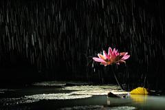 rain (chunwoo, song seungjin) Tags: rain showers healing   rainseries