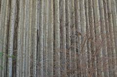 Birb (SrslyKris) Tags: toronto tree bird birds hidden deadtree disguise ontariosciencecentre kmphot