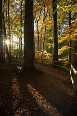 Auf dem Weg (Guido Bl.) Tags: wood autumn tree nature herbst sauerland hemer