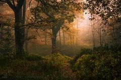 Dun Dubh III (GenerationX) Tags: autumn trees mist leaves landscape scotland unitedkingdom scottish neil gb prints trossachs spiderwebs barr aberfoyle thenarrows lochard queenelizabethforestpark achrayforest canon6d laraich dondubh