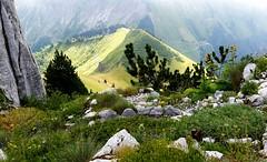 le jardin alpin (Olia vk) Tags: switzerland rochersdenaye lejardinalpin