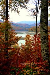 Río otoñal (binladiya) Tags: autumn trees leaves río river hojas árboles selva otoño navarra irati