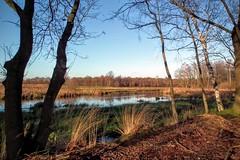 DSCF7354.tif (Ad Sebregts) Tags: tree forest river margriet