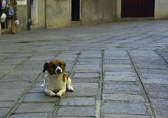 Italy Venice Street Doggy (charles.duroux) Tags: flickr nyip panoramio