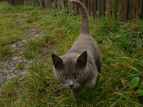 Obergeorgenthaler Katze III