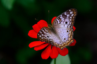 20141211_085317_Moth on Flower