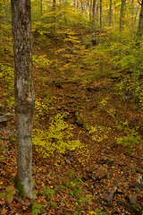 DSC_0080 (Raymond H G) Tags: park autumn trees fall leaves yellow forest landscape maple state pennsylvania great foliage trail acer gorge birch trunks ohiopyle betula